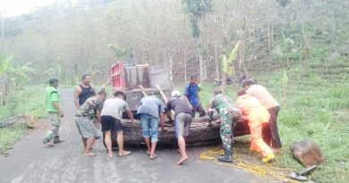 Lancarkan Arus Lalu Lintas, Babinsa Posramil Sekar Bojonegoro Bantu Singkirkan Pohon Tumbang